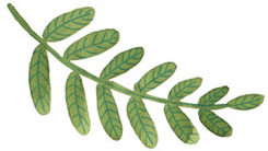 home-image-leaf-1