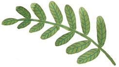 home-image-leaf
